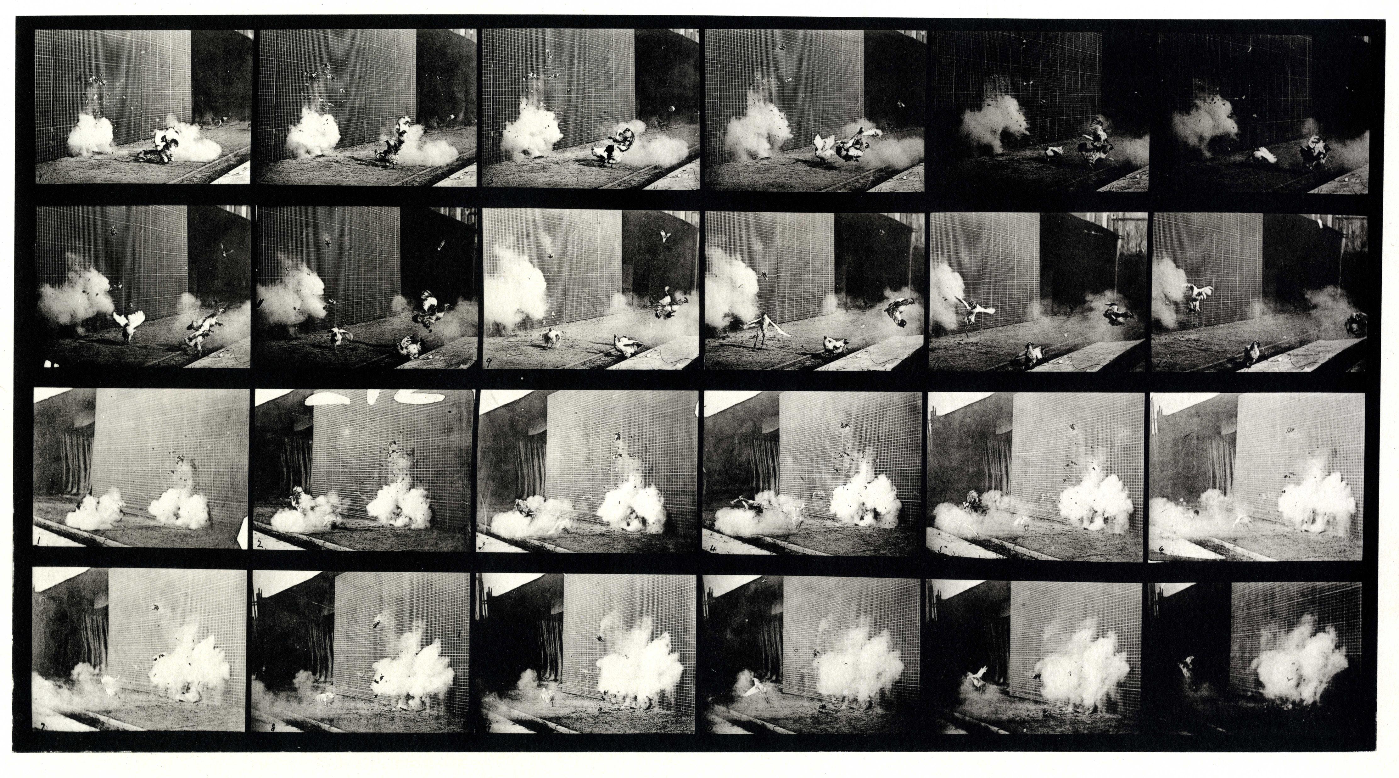Exploding torpedo, Eadweard Muybridge. Image courtesy Laurence Miller Gallery