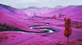Richard Mosse at Jack Shaman Gallery, New York. Image © Richard Mosse and courtesy of the gallery