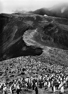 Sebastiao Salgado, Chinstrap Penguin. Image Peter Fetterman Gallery