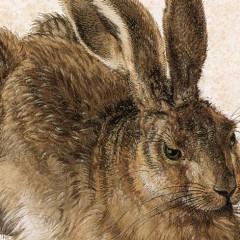 Albrecht Durer, Young Hare