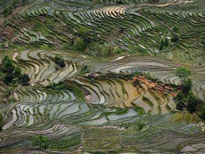 Edward Burtynsky, 'Rice Terraces #4, Western Yunnan Province', China, 2012 Chromogenic color print on Kodak Endura Premier Paper. Printed 2014. Courtesy Ed Burtynsky and Howard Greenberg Gallery, New York. AIPAD