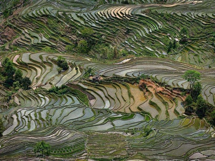 Edward Burtynsky, 'Rice Terraces #4, Western Yunnan Province', China, 2012 Chromogenic color print on Kodak Endura Premier Paper. Printed 2014. Courtesy Ed Burtynsky and Howard Greenberg Gallery, New York