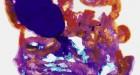 Adam Fuss, Color Test, Image © Adam Fuss